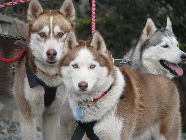 Rusty, Kodiak and Natasha