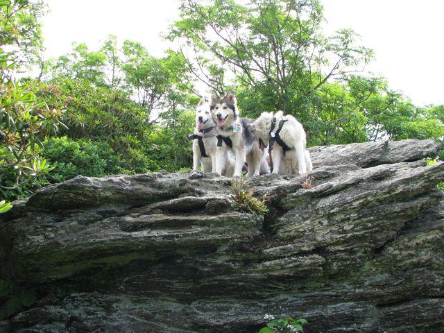 Wolf Rock II