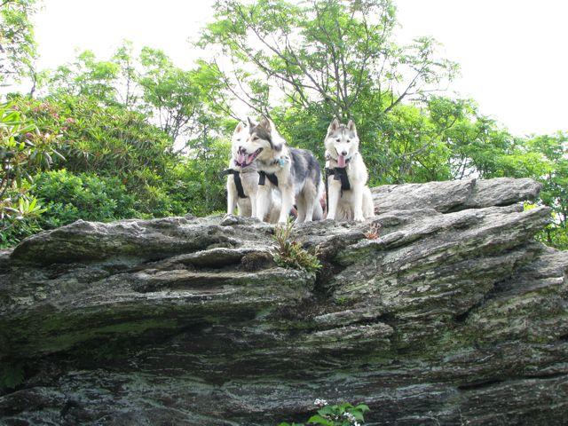 Wolf Rock III