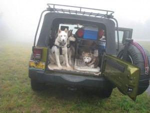 Jeep if fog
