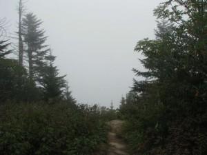 Foggy Maggie Valley
