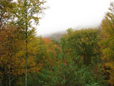 Fall Oct 17