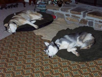 Nikita and Natasha sleeping