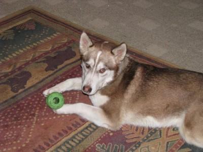 Kodiak and his toy