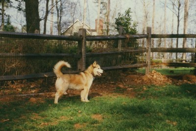 Nikita - Our original escape artist