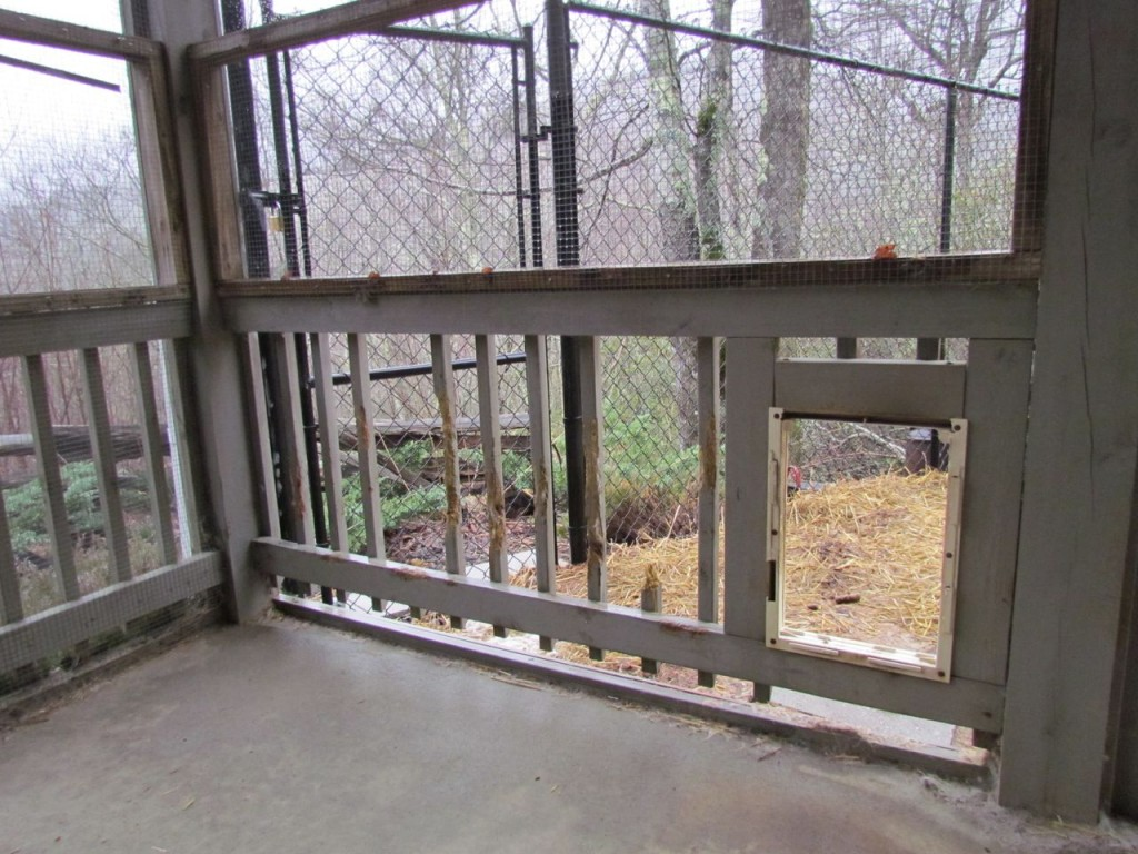 Another view - with the dog door (or lack of dog door)