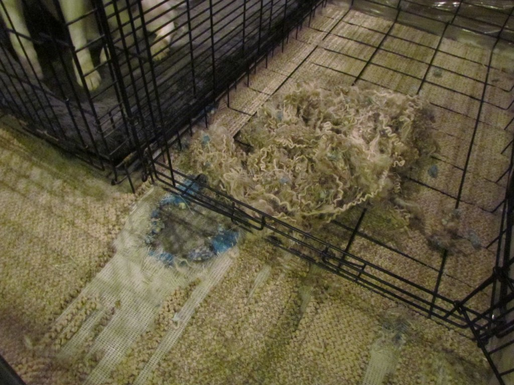 Apparently to the concrete floor underneath the carpet AND the carpet pad.