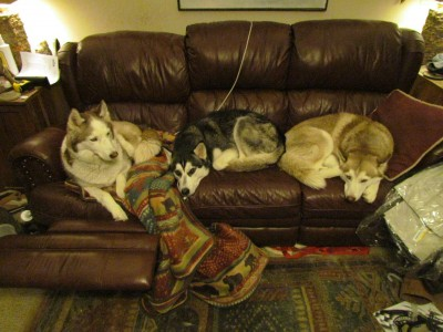 2012 Resolution - Occupy the Couch