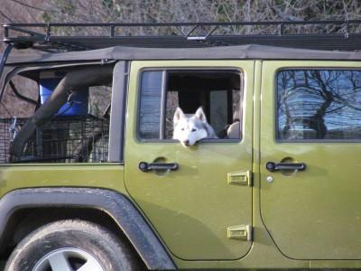 Natasha waiting in the Jeep