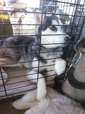 Frankie's cage
