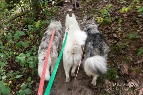 trail narrowed