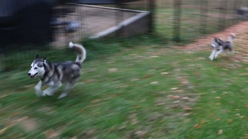 Frankie leading Typhoon on a chase.