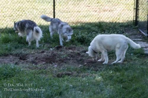 grub hunting - outdoor activities