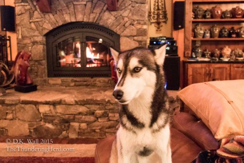 Though, as a Siberian Husky, I am supposed to pretend I don't like warm