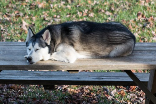 Napping on the picnic table.