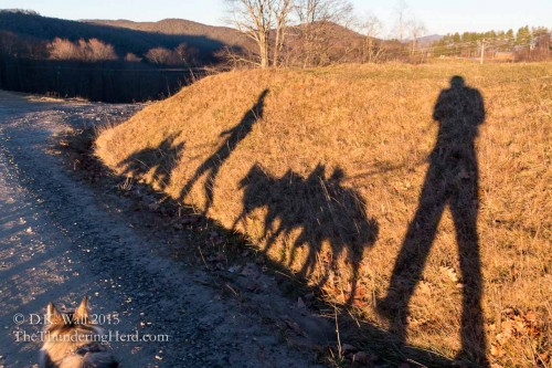 Shadow dogs and shadow humans - the joys of sunset and shadows.