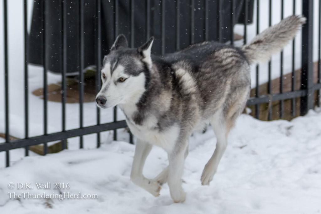 Super Siberian Snow Season