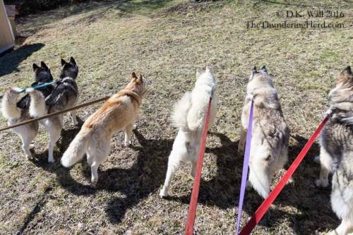 Daily family walk.