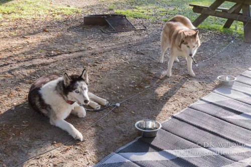 Don't worry - our cousins Tartok and Ruby are in the next campsite!
