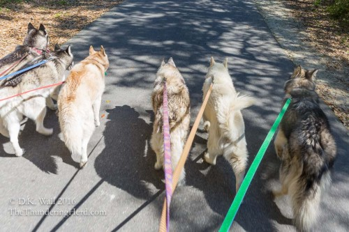 A normal family walk.