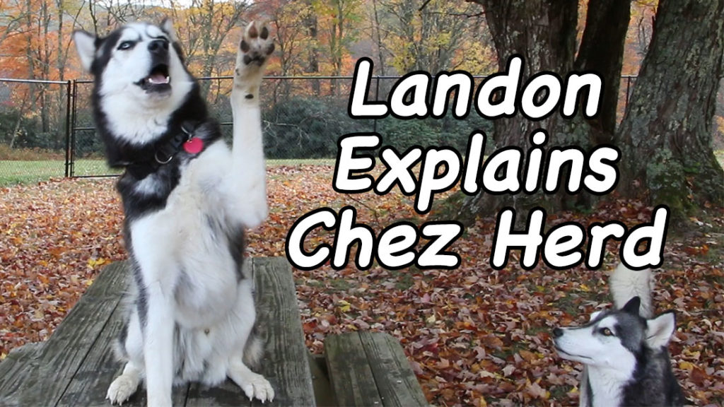 Landon Explain Chez herd