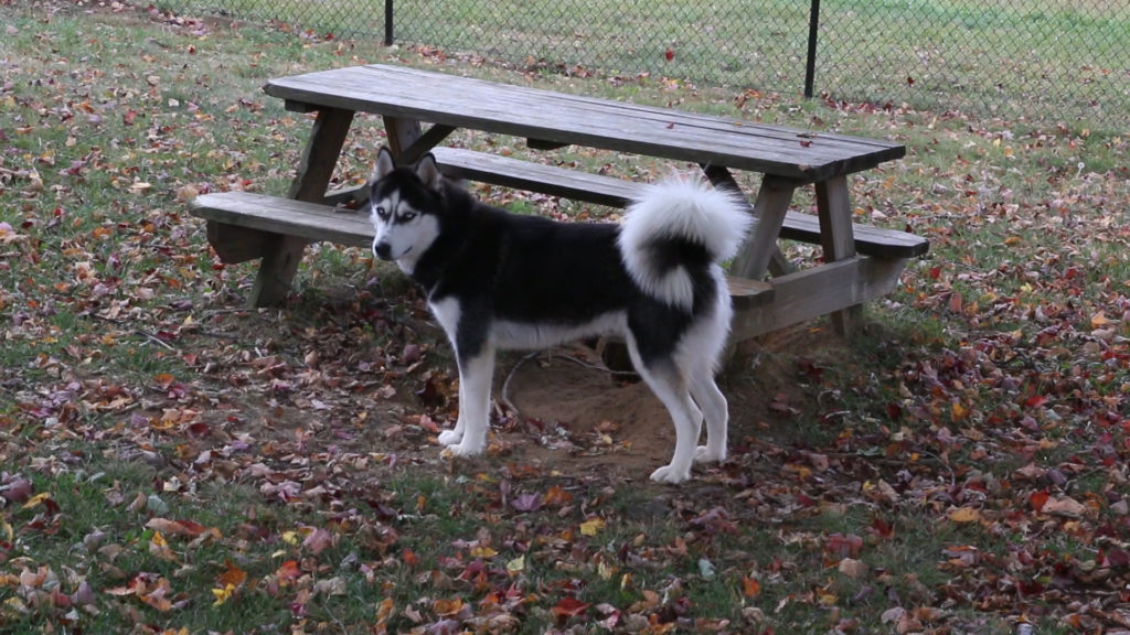 One of his favorite spots - the picnic table.