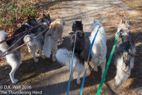 Six happy tails on trails.