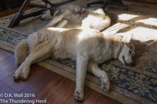 Typhoon and Cheoah napping under Hu-Dad's desk.