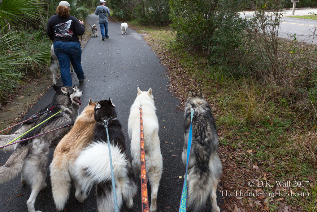 Out for a walk . . . with three additional furry friends!