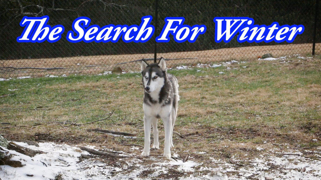 The Search For Winter – An Action Hero Film