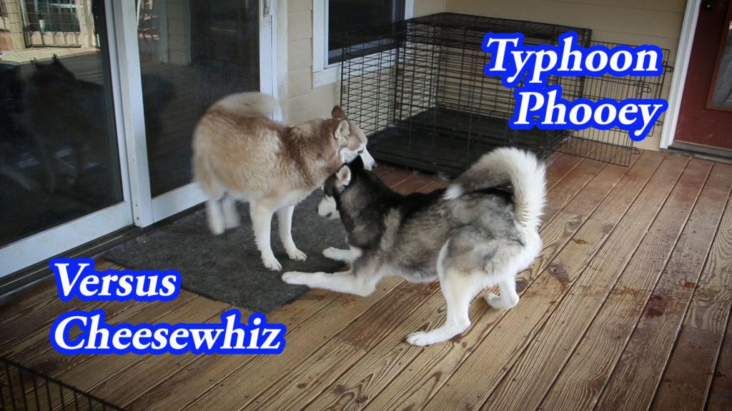 Typhoon Phooey Versus Cheesewhiz