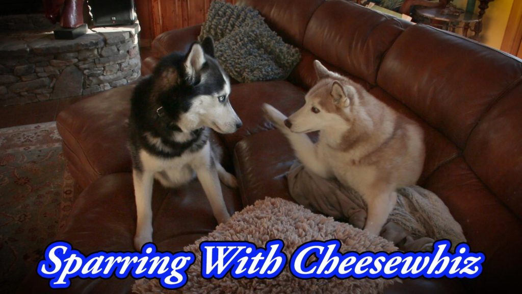 Sparring With Cheesewhiz – Film Friday