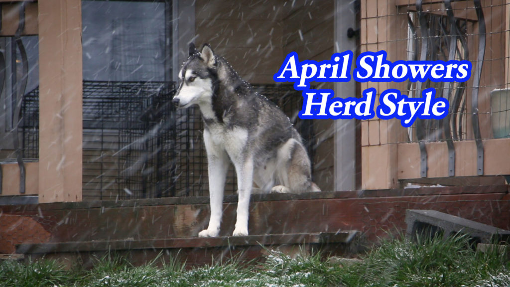 April Showers Herd Style – Film Friday