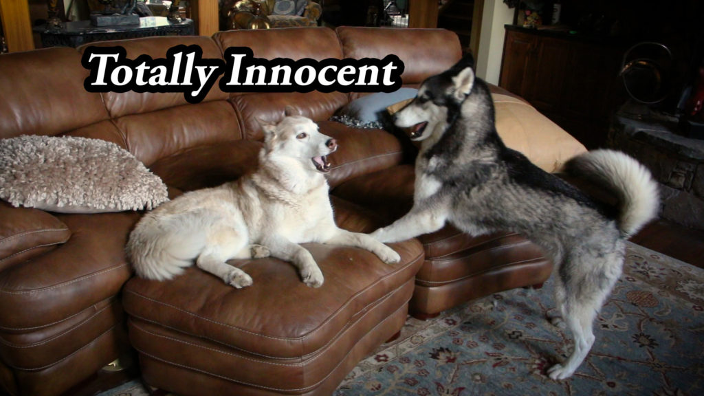 Totally Innocent – Film Friday