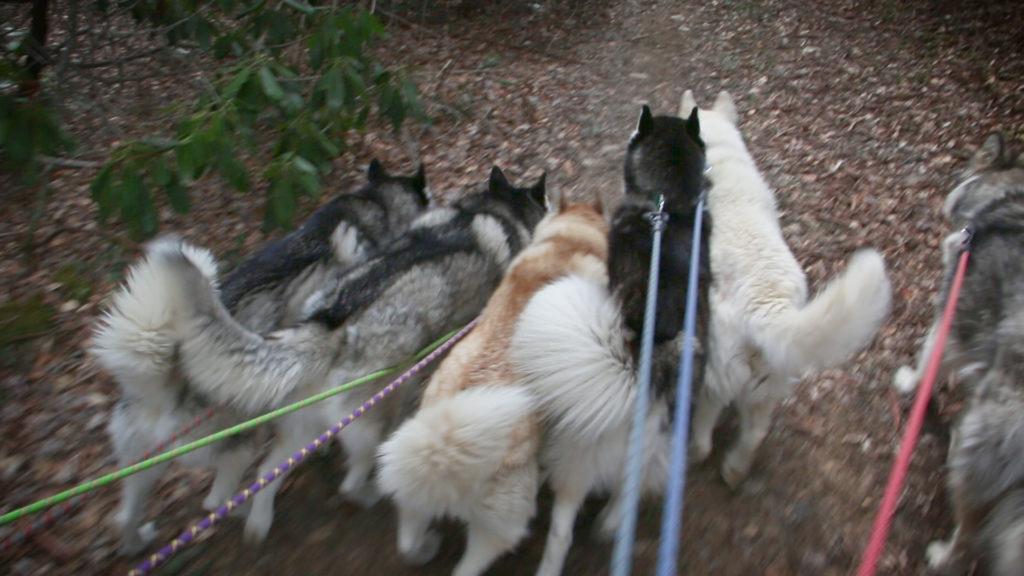 Herd Walking