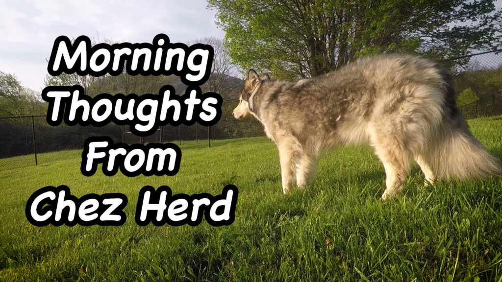 Morning Thoughts From Chez Herd