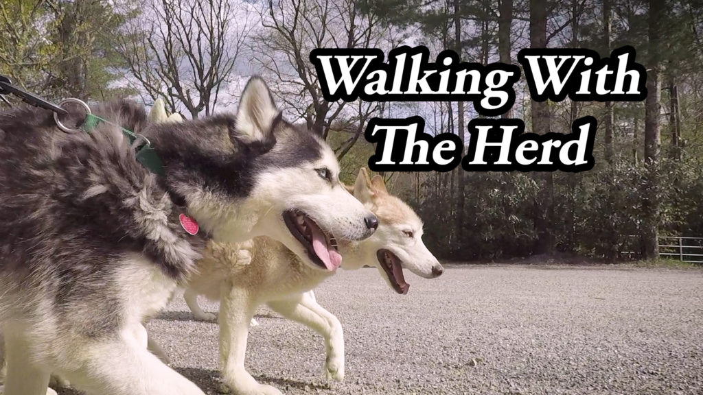 A Different POV – Walking With The Herd