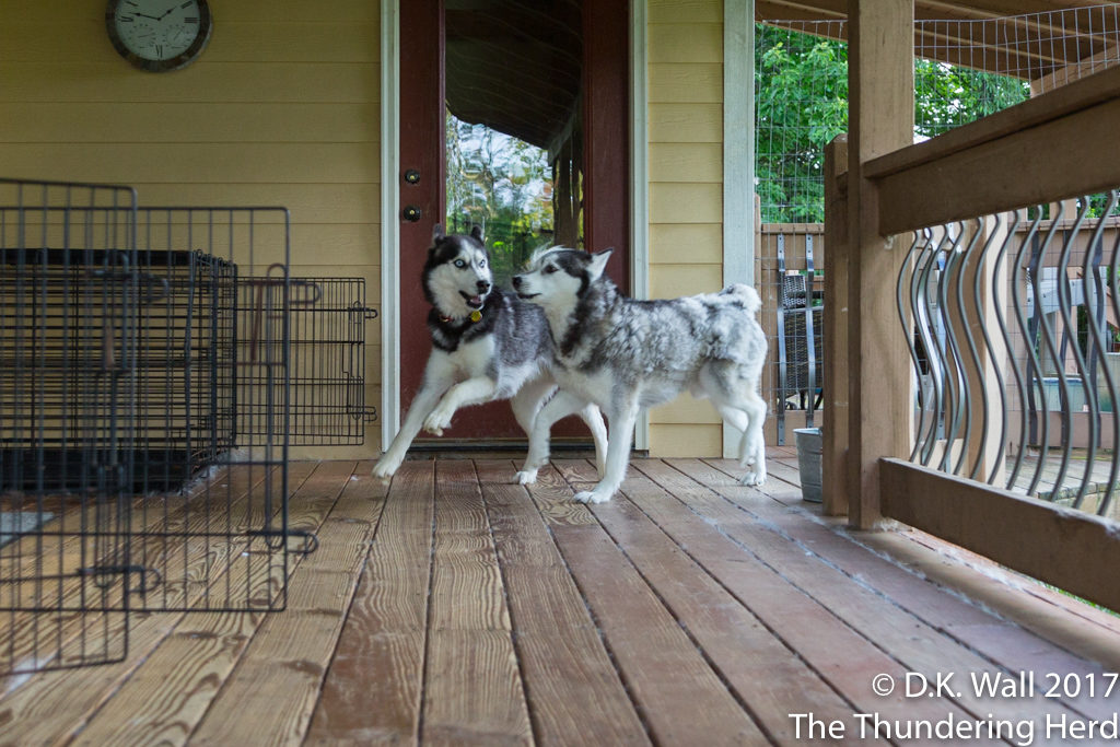 Frankie and Landon coming back to the porch after a yard patrol.