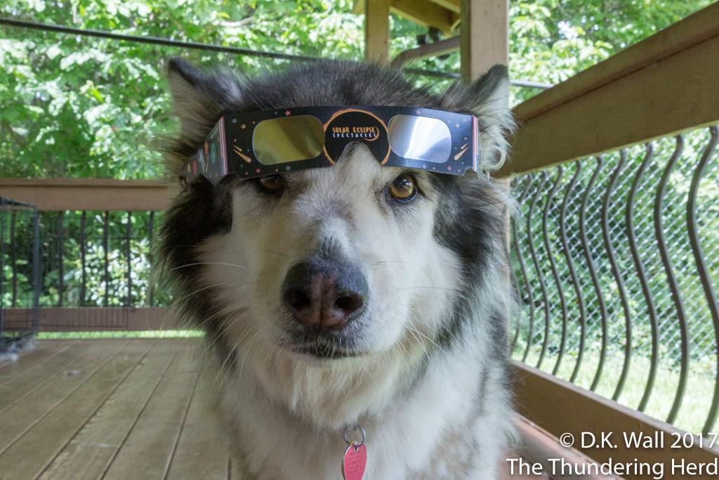 Solar Eclipse Glasses Model Failure