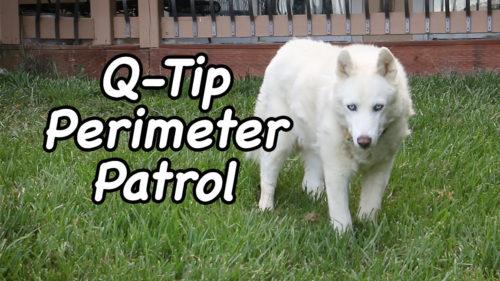 Q-Tip Perimeter Patrol