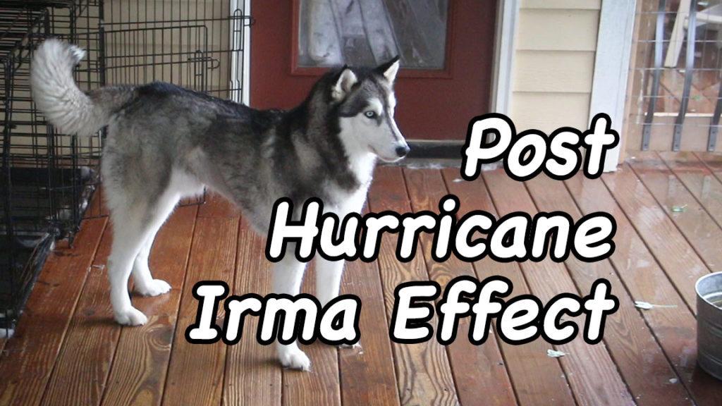 Post-Hurricane Irma Effect – Film Friday