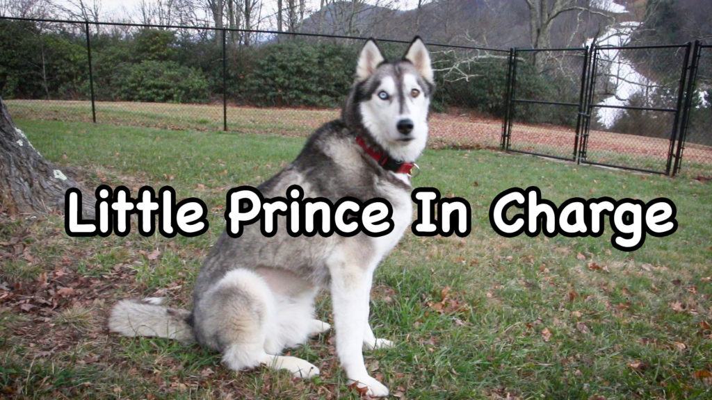 Little Prince In Charge