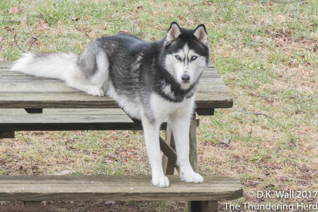 The Siberian Sit.