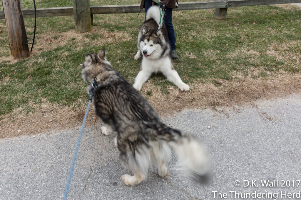 Kiska got him play bowing back!