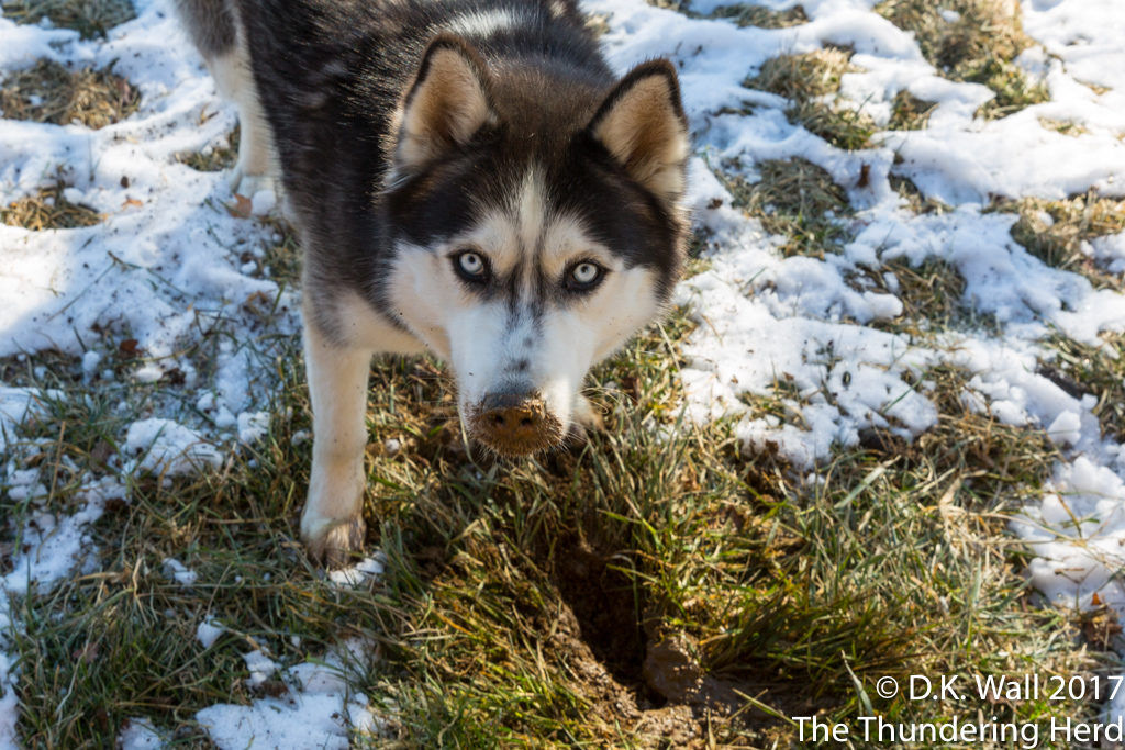 Just sniffing the ground here, Hu-Dad.