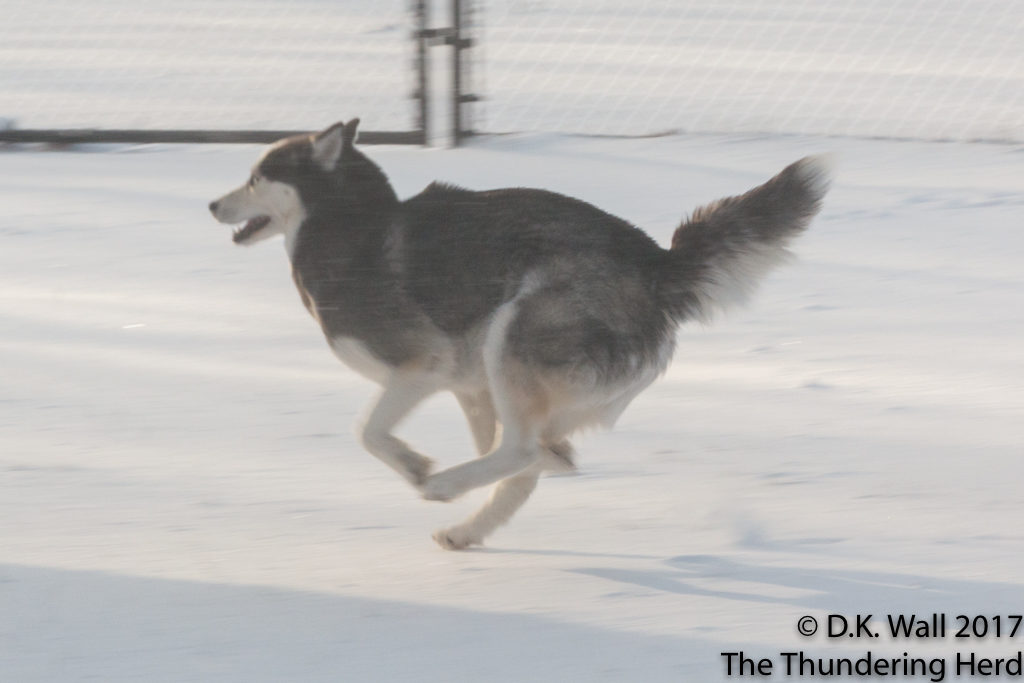 Zoomies and the Snow Insanity Defense.