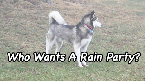 Who Wants A Rain Party