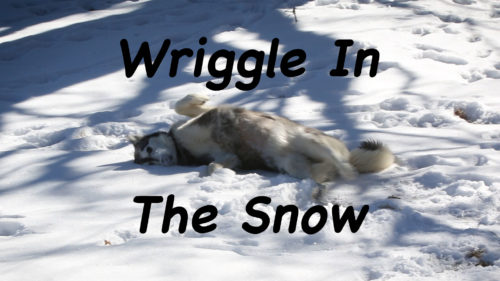 Wriggle in the snow