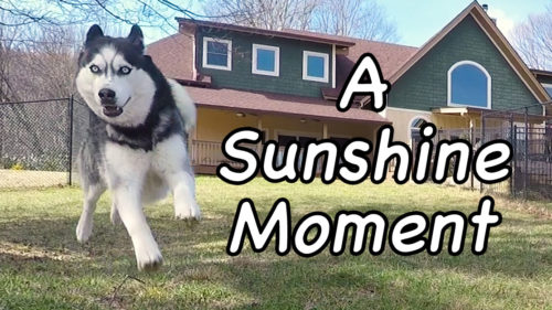 A Sunshine Moment