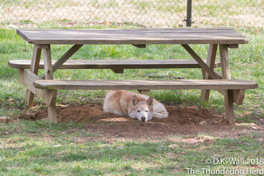 Cheoah's fort is perfect for a quiet nap.